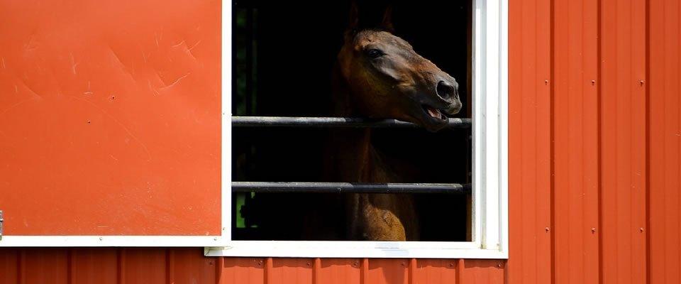 Steel Horse Barns: The Design Of Tomorrow