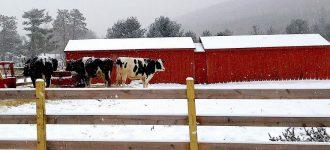 Building a Livestock Barn